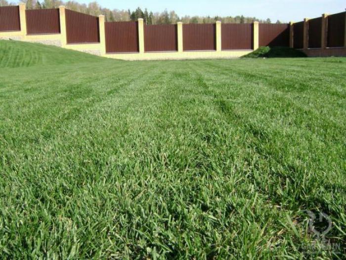 чем вывести траву с дорожек двойному слою эмалевого