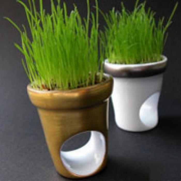 Вырастить газон в домашних условиях 43